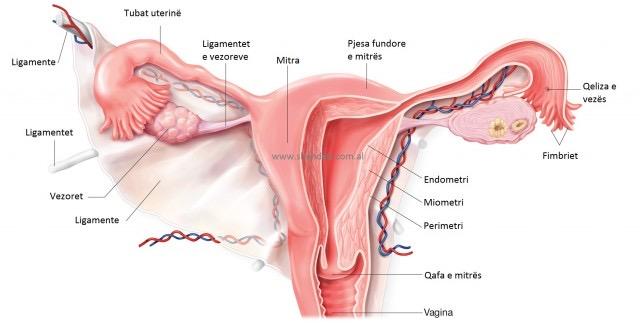 Si trajtohet kanceri i qafës së mitrës?